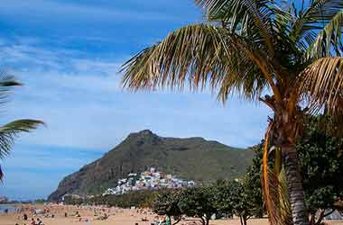 Costa Adeje palmbomen
